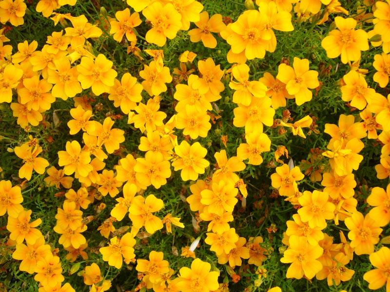 blumen flowers free pictures download. Black Bedroom Furniture Sets. Home Design Ideas