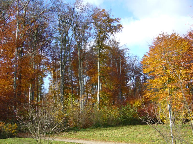 Herbstwald_Forest