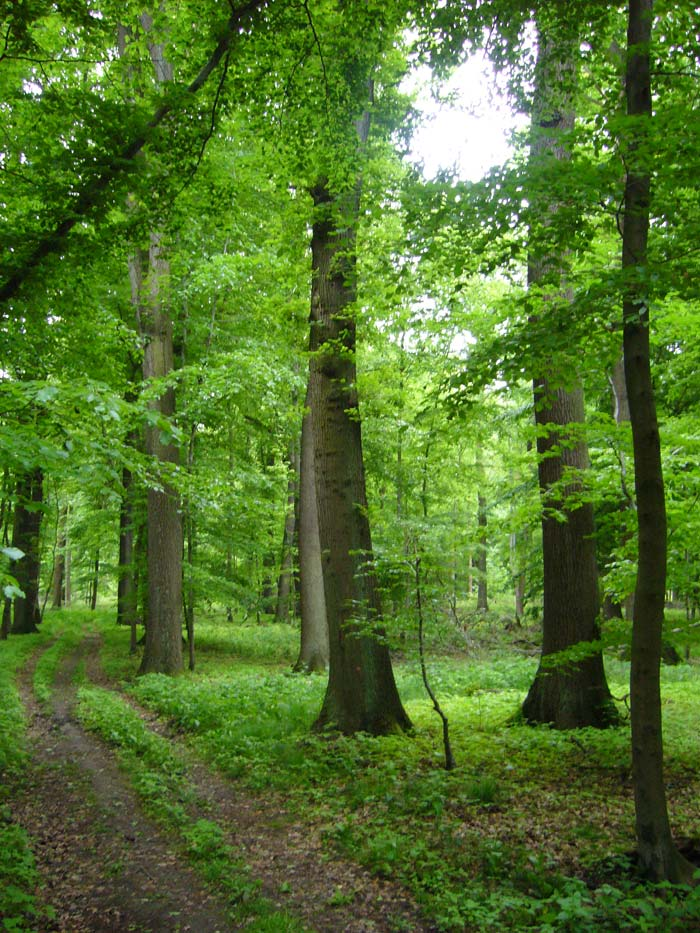 Wald_Forest_Summer